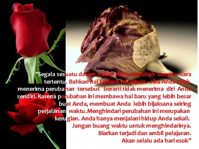 mawar-berubah